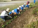 学校環境緑化活動